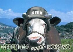 Kfor_1